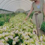 Image: Adene's Farm Flowers
